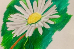 2_Daisy