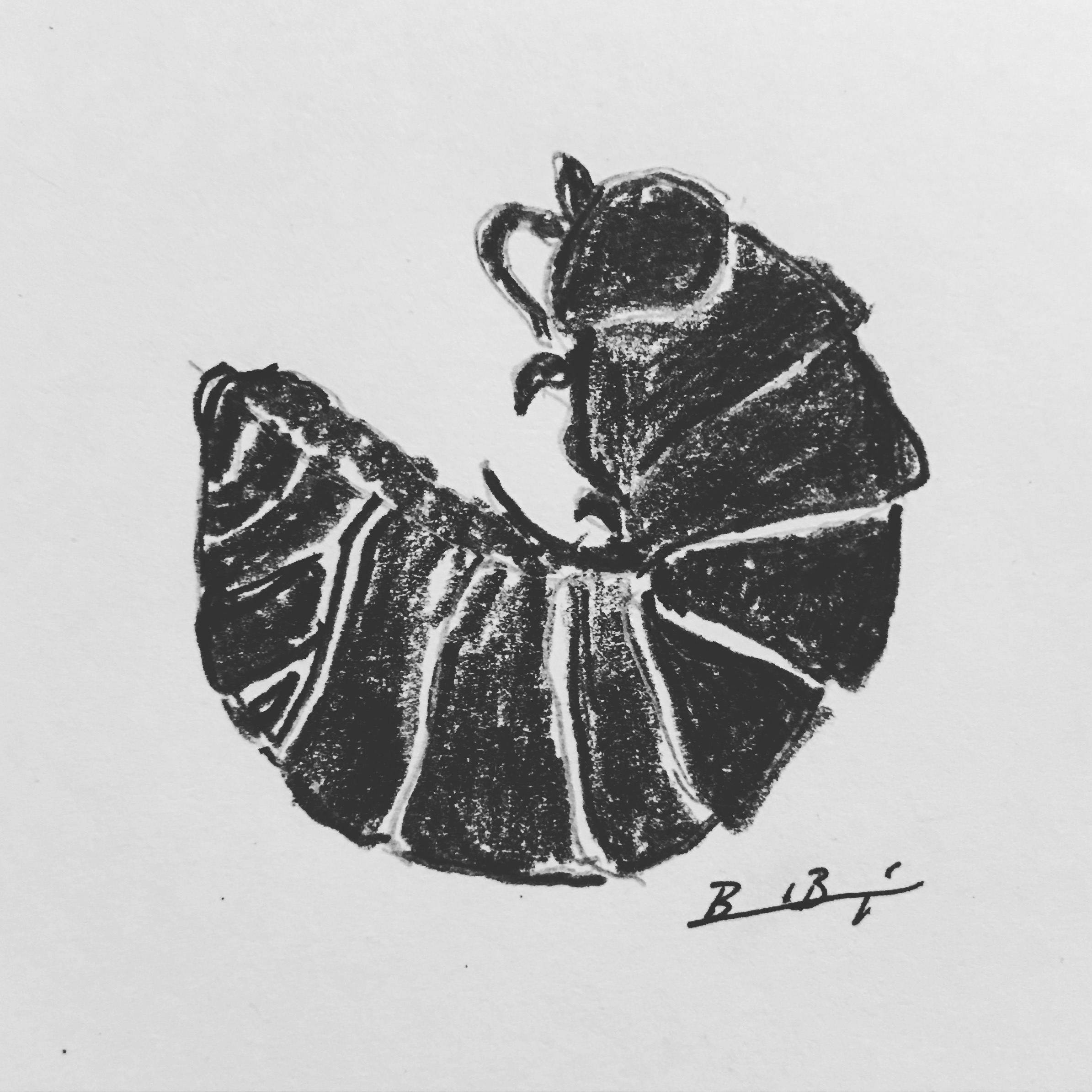 12_Insect