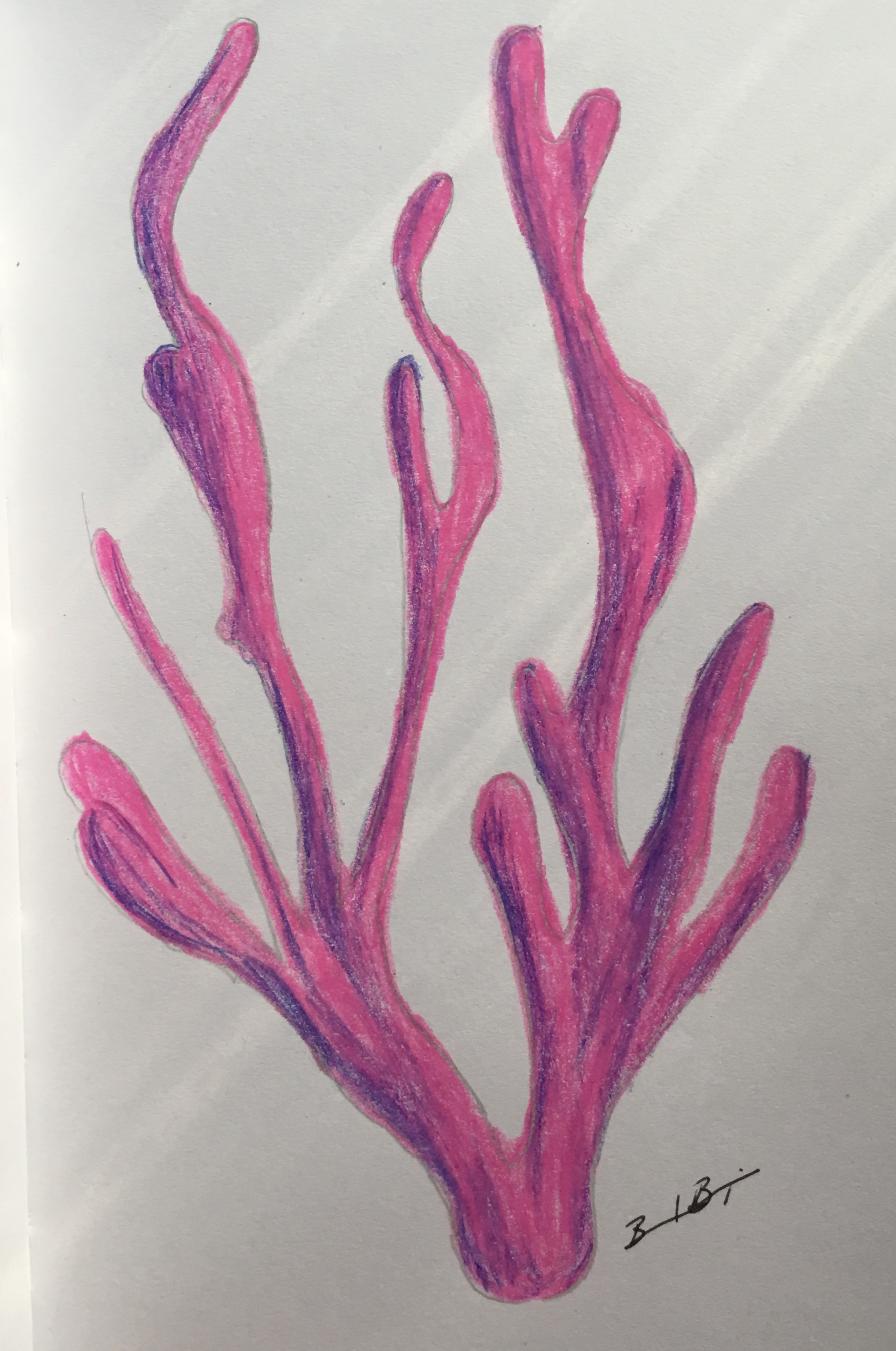 3_Coral