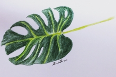 15_Monstera Leaf