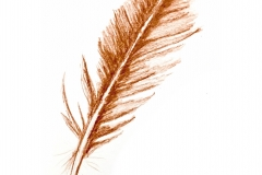 6_Feather