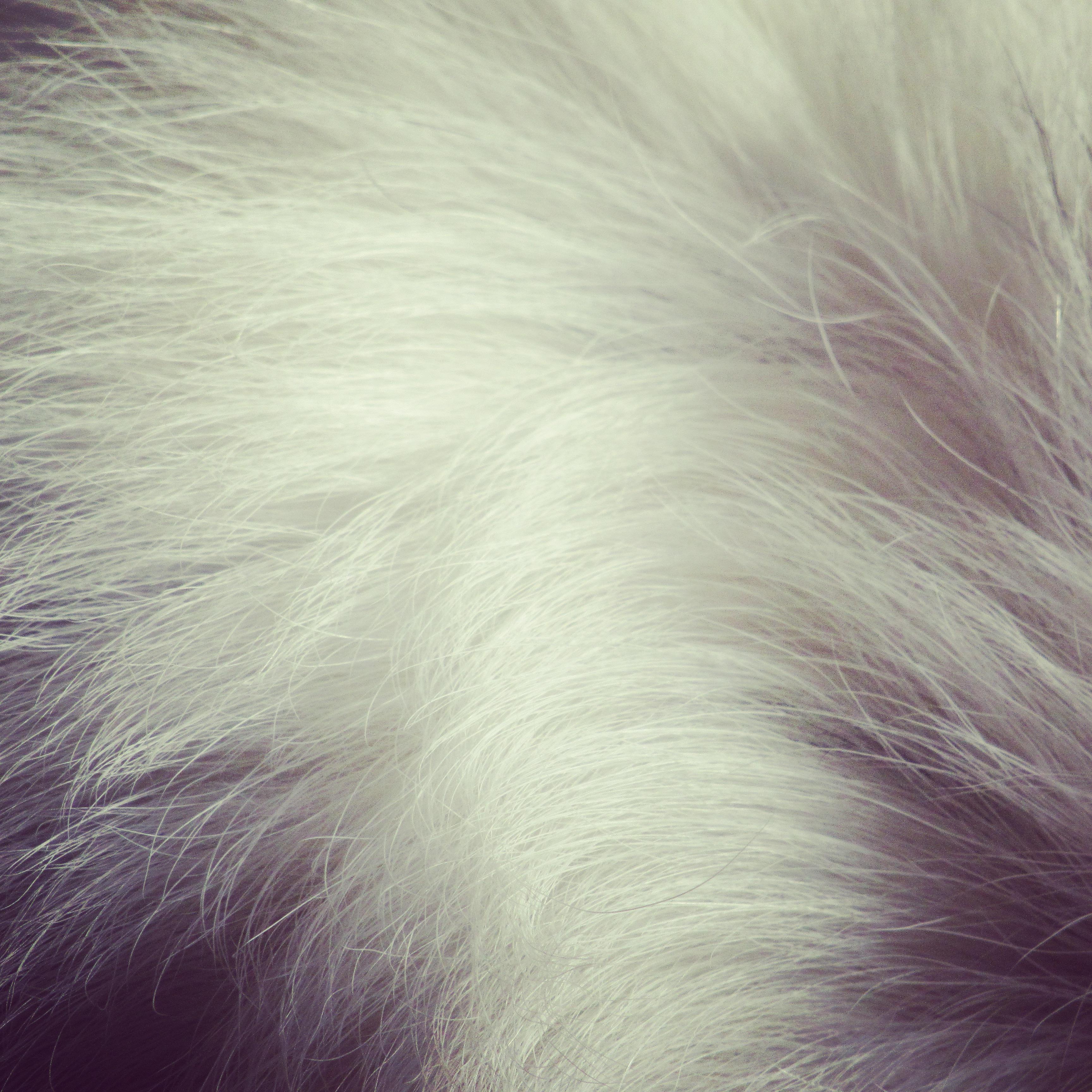 20_Fur