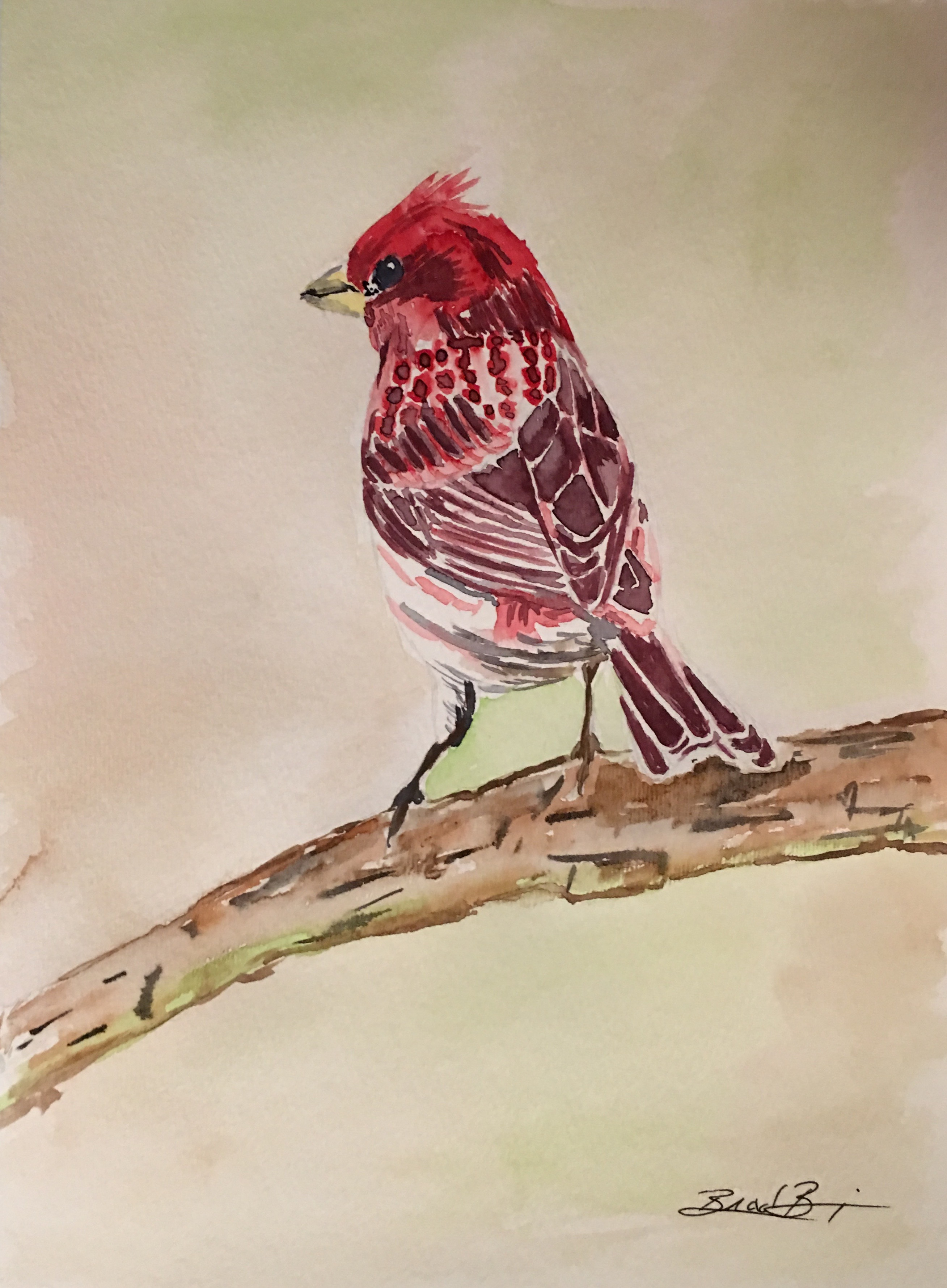 15_Purple_Finch-NH