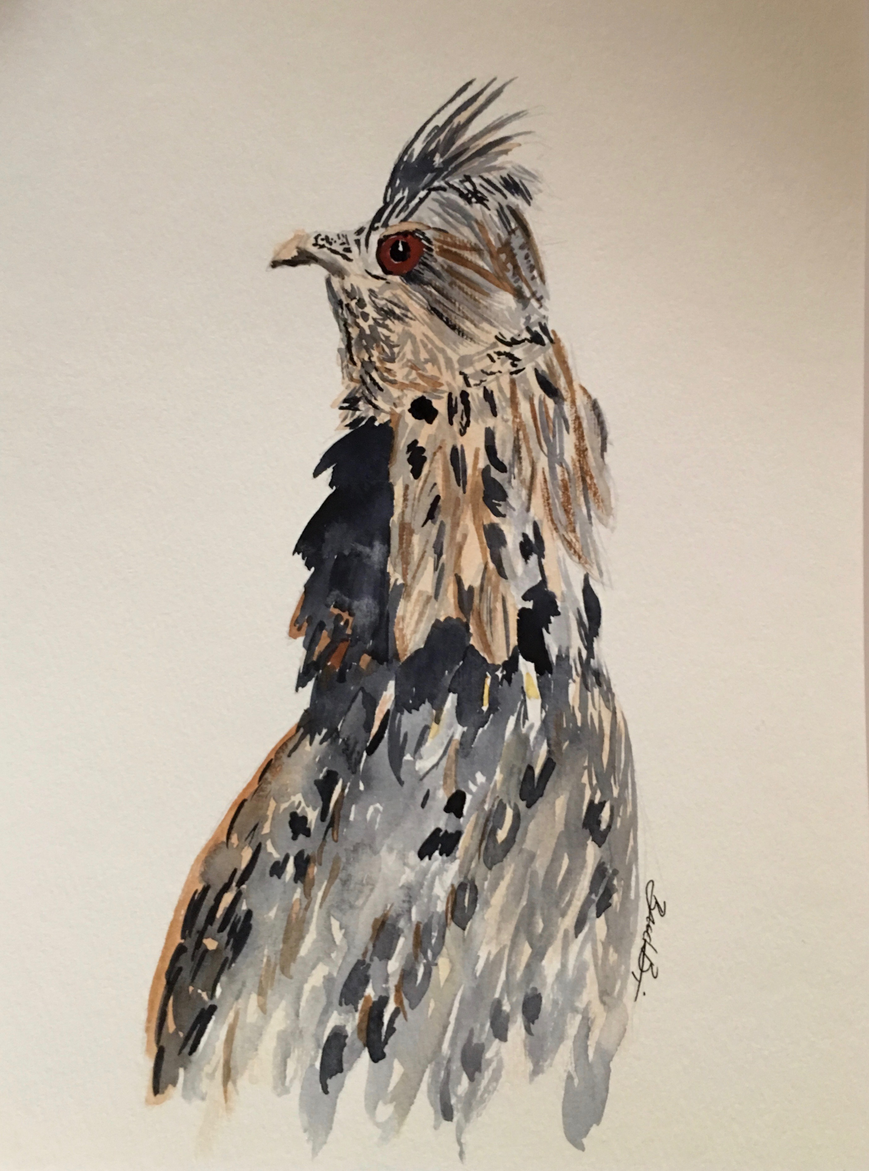 18_Ruffed_Grouse-PA