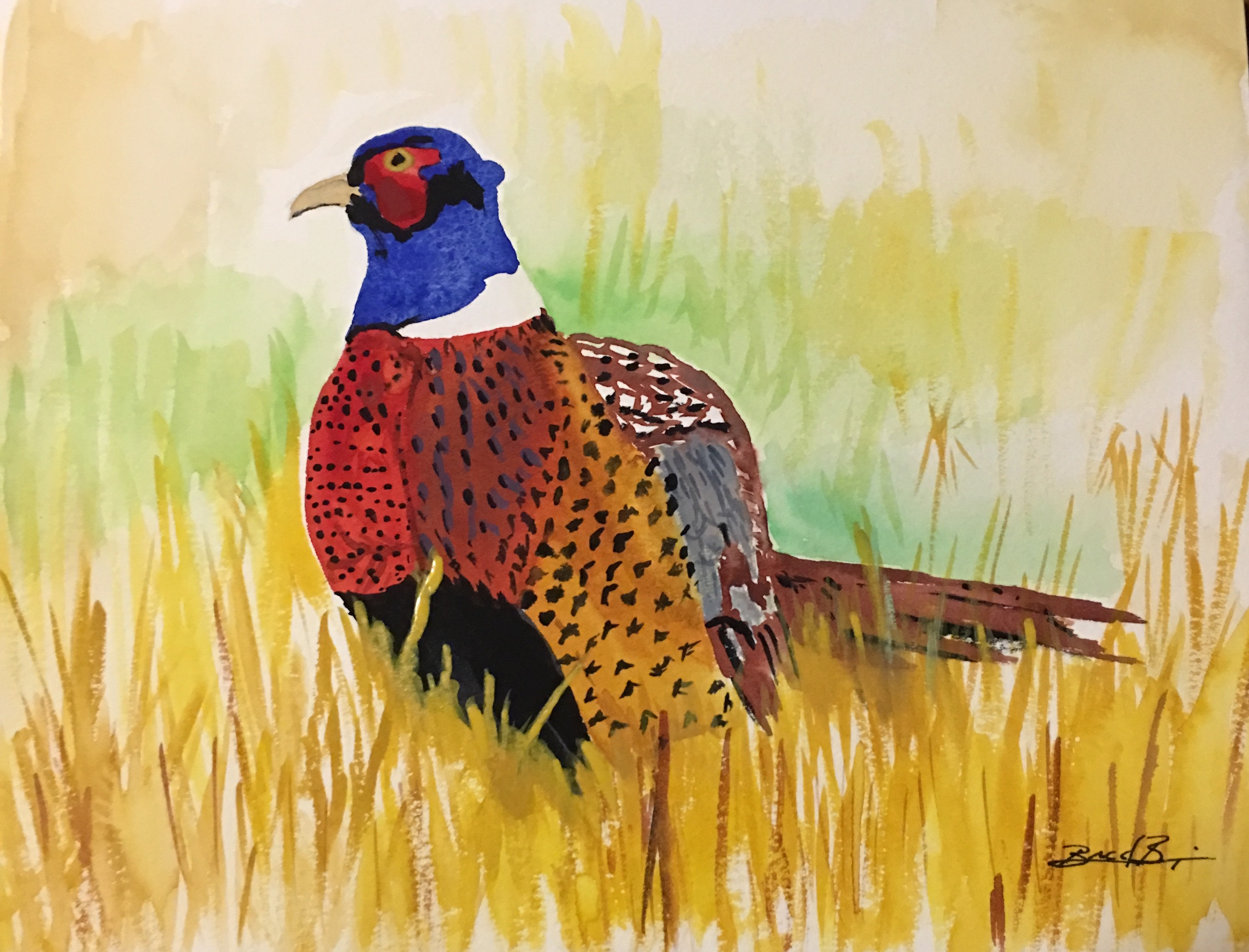 1_Ring-Necked_Pheasant_SD