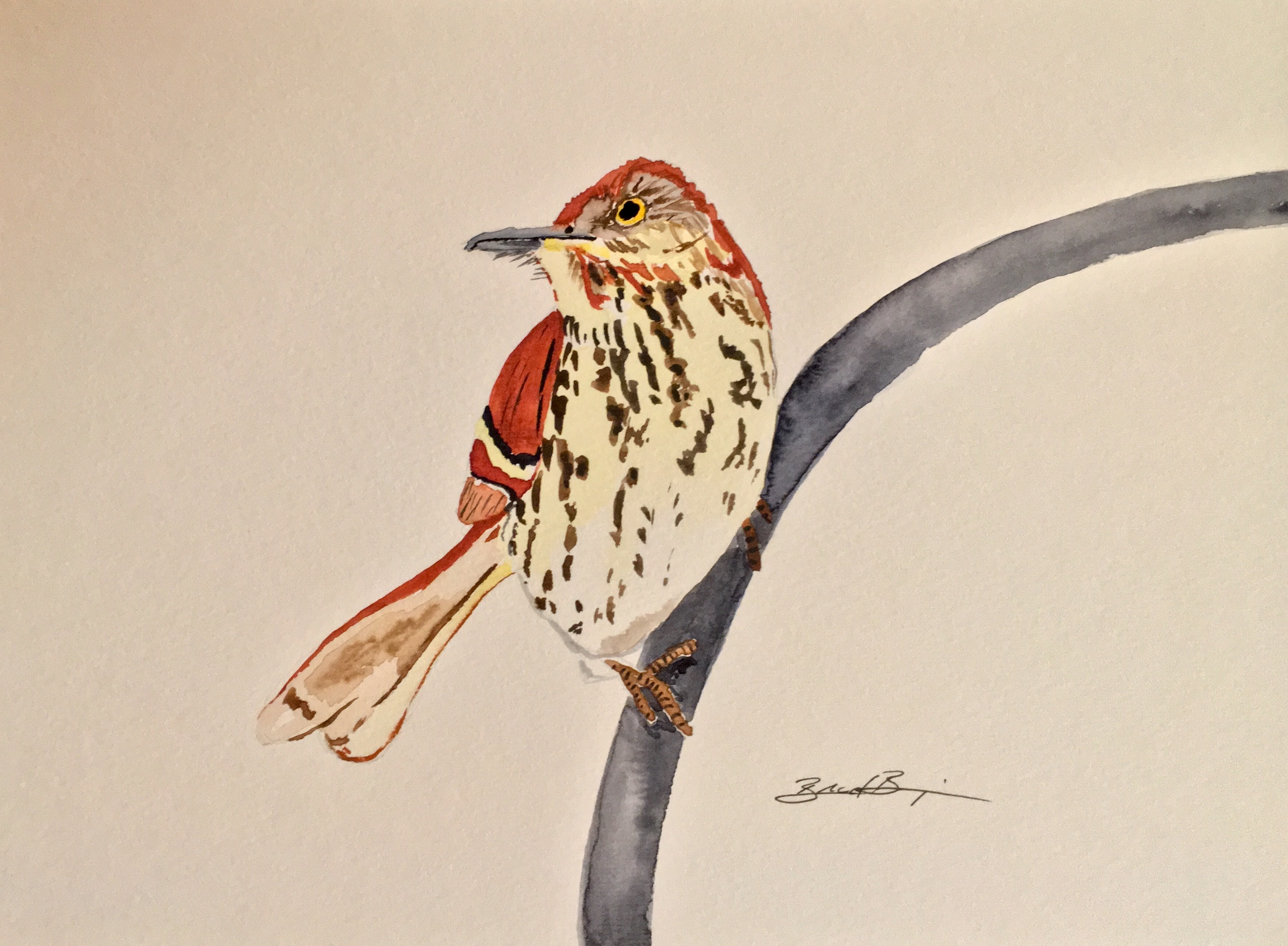 20_Brown_Thrasher-GA