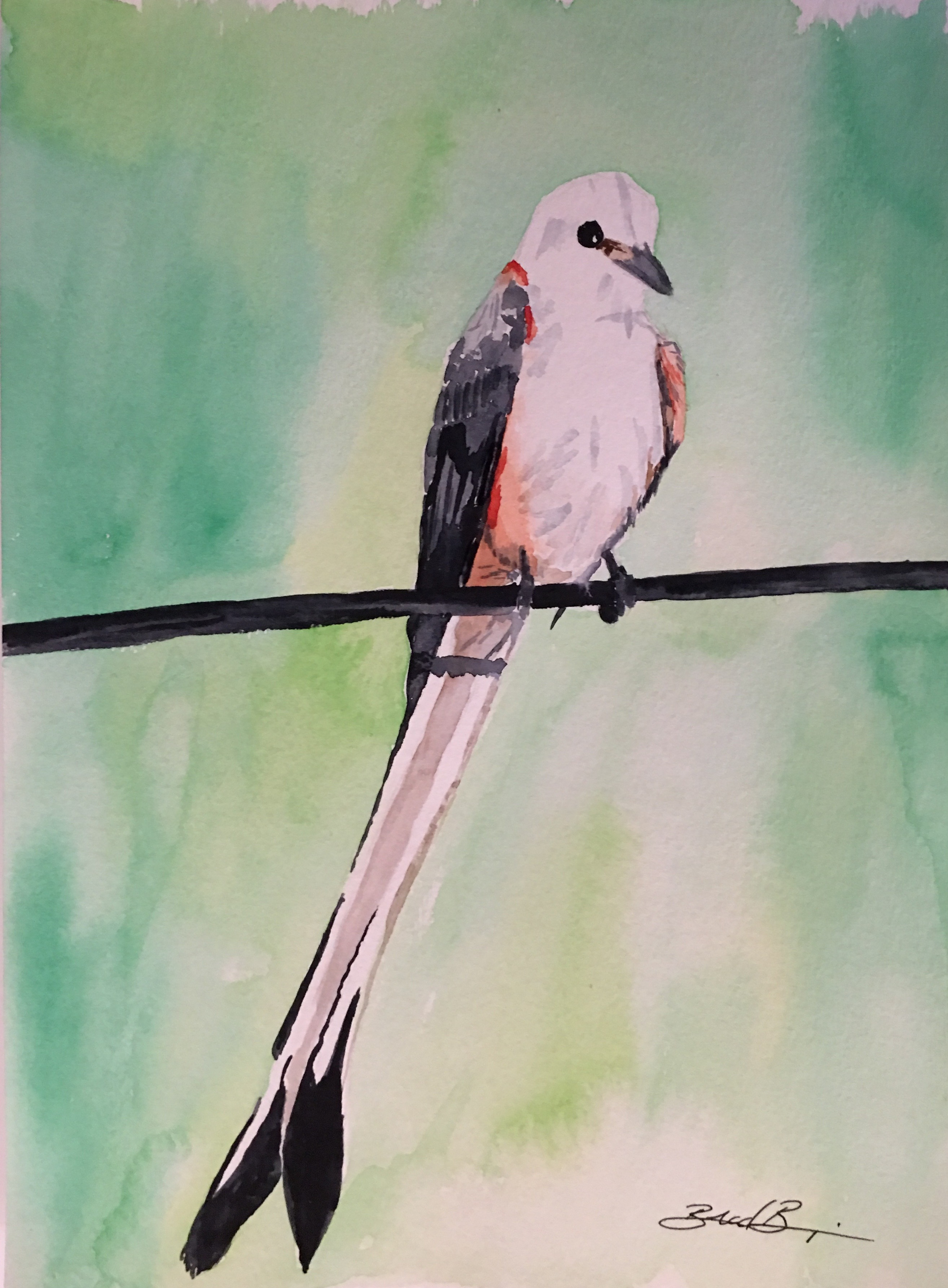21_Scissor-tailed_Flycatcher-OK