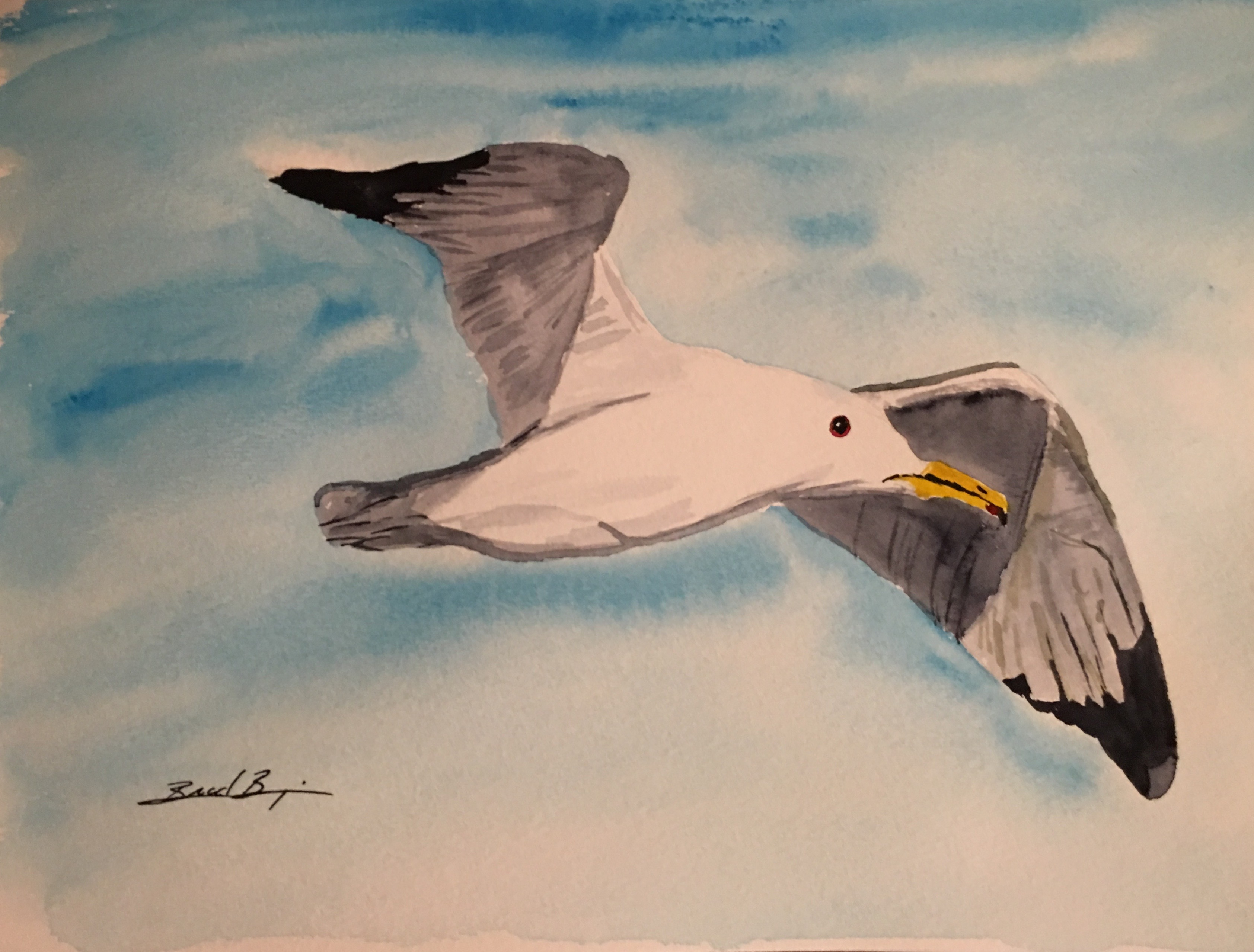 22_California_Gull-UT