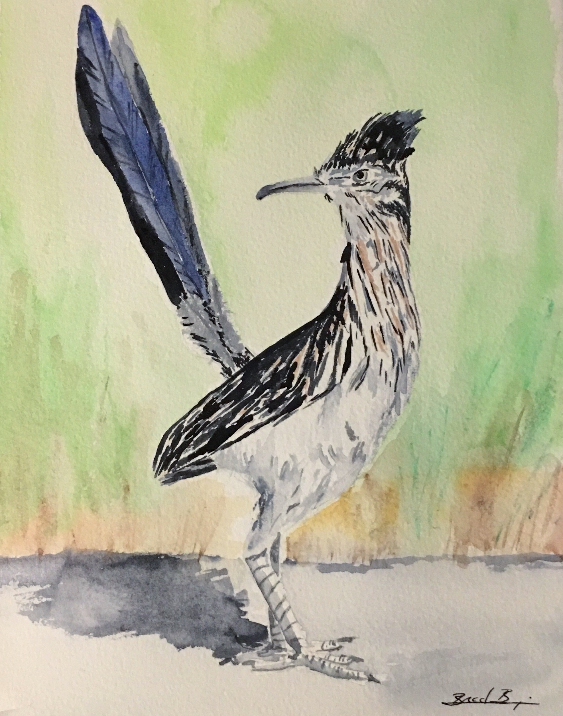 2_Greater_Roadrunner_NM