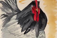 12_Blue_Hen_Chicken-DE