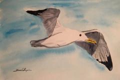 22_California_Gull-UT