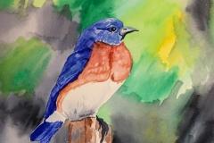 6_Eastern_Bluebird-MO_NY