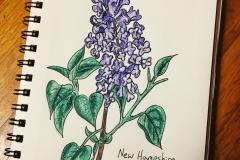 15_Lilac-NH
