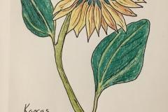 17_Sunflower-KS