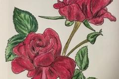 5_Rose-NY_OK