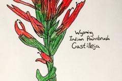 7_Indian_Pantbrush-WY